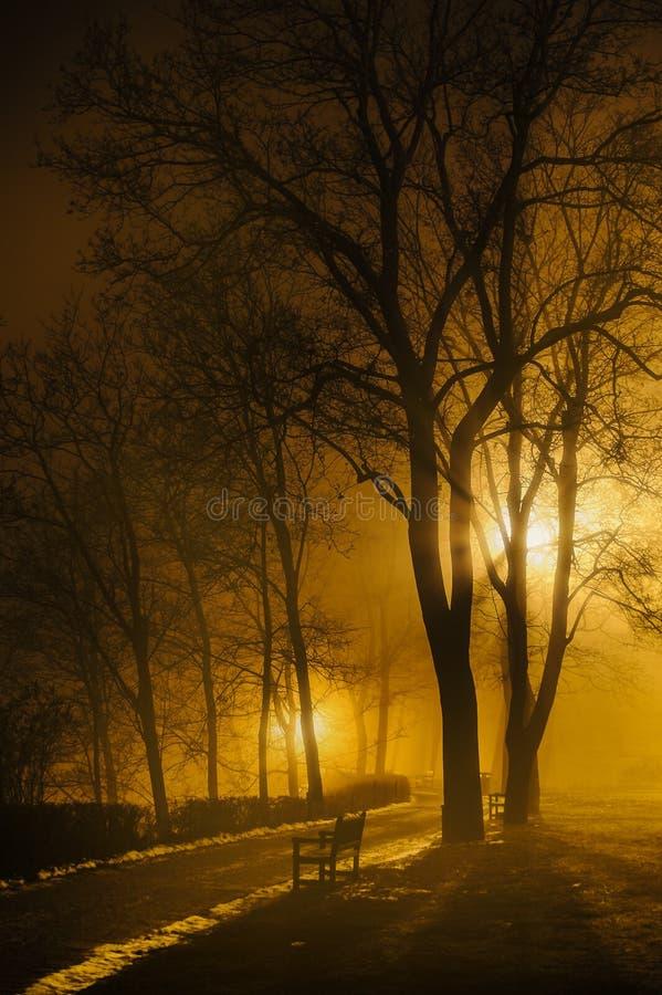 Foggy Night In Park Stock Photos