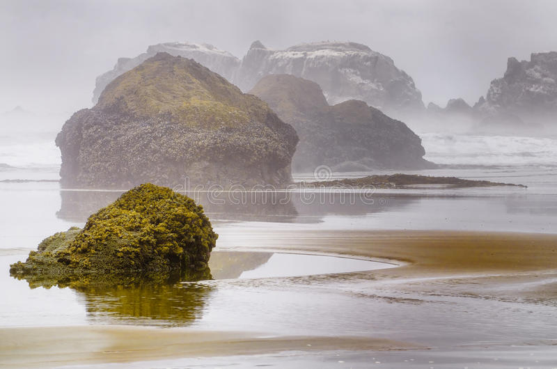 Foggy Oregon Coast. An escape to the foggy Oregon Coast, with mysterious sea stacks rising from the water crusted with living organisms, and the sand on the royalty free stock image