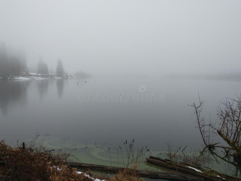 Foggy overcast winter lake algae beach royalty free stock images
