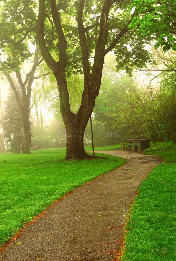 Foggy park stock image