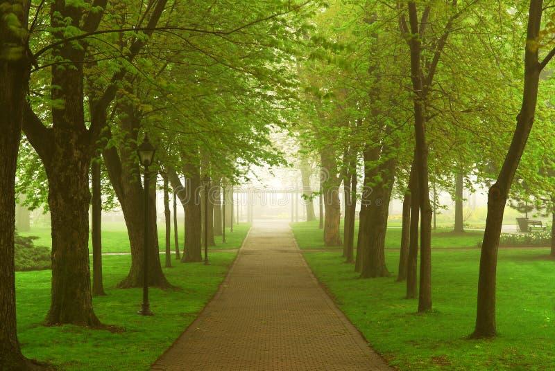 Foggy park royalty free stock photography