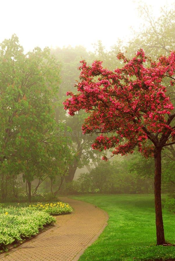 Foggy park royalty free stock image
