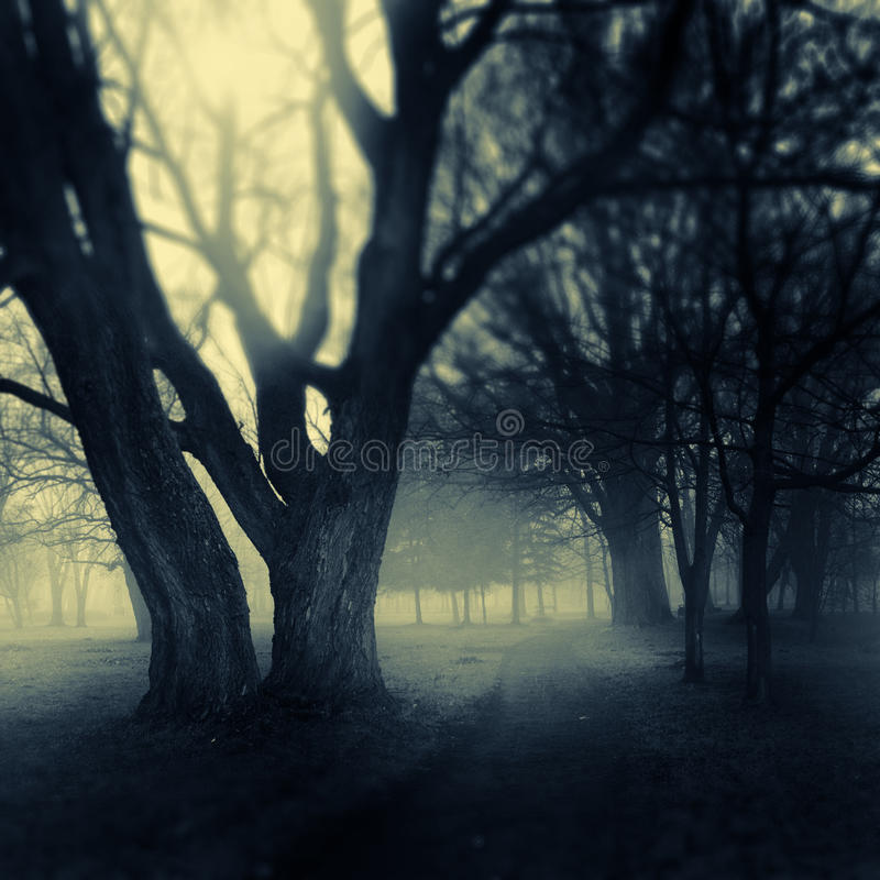 Download Foggy park path stock photo. Image of barren, haunting - 18897622