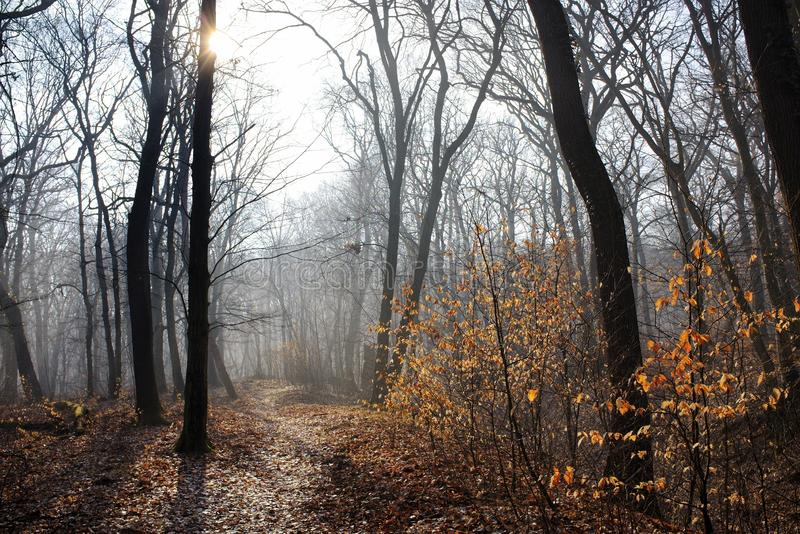 Foggy park with pathway and sun. Misty park with pathway and sun stock photos