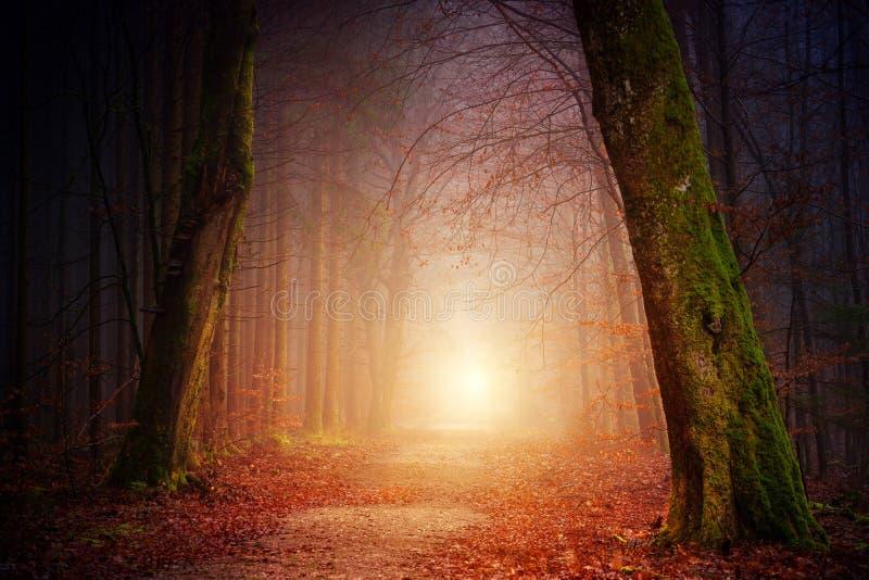 Foggy Path royalty free stock photography