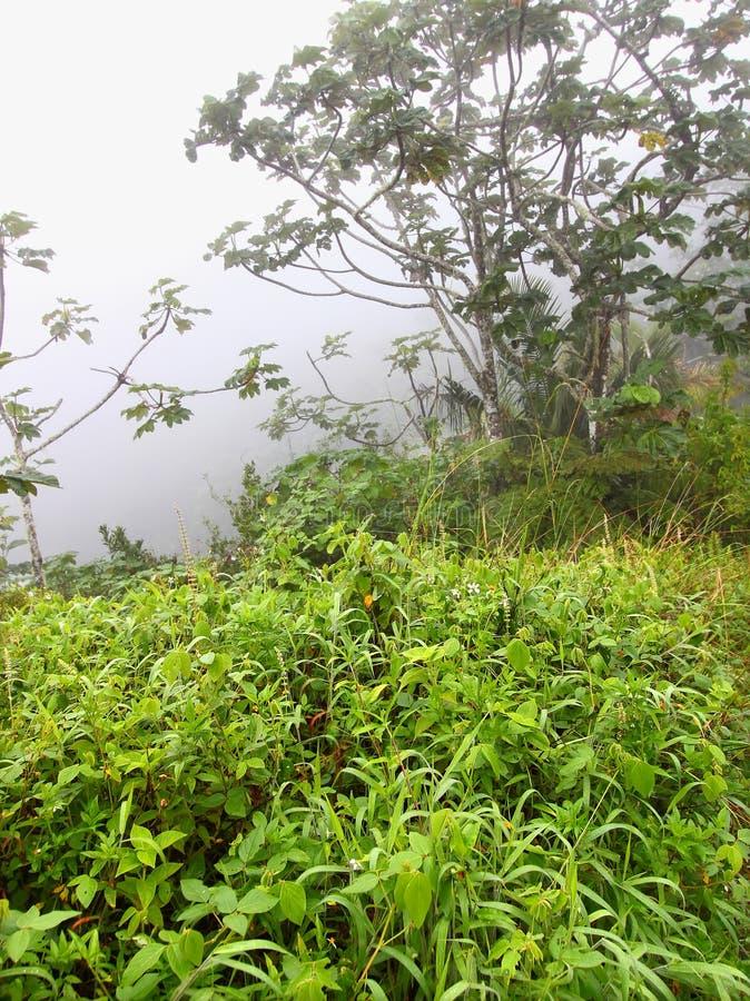 Download Foggy Puerto Rico Rainforest Stock Image - Image: 20795757