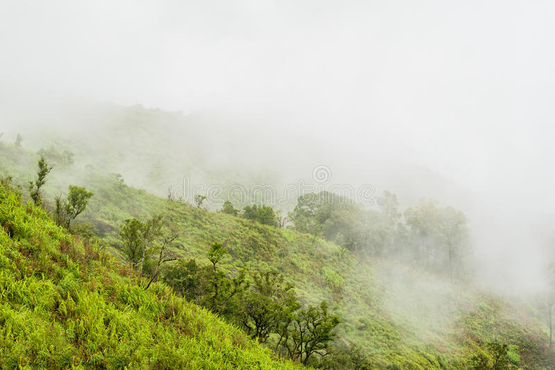 Foggy rain forest on a mountain slope in a national park on morning.  royalty free stock photography