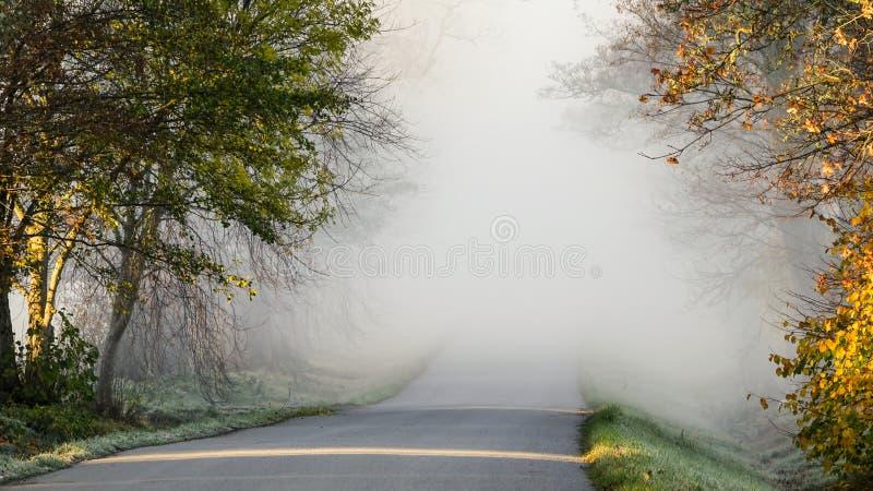 Foggy road, avenue. stock image