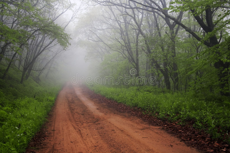 Foggy road through forest stock photography