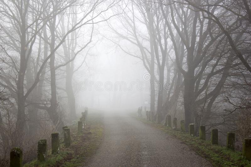 Foggy road and trees. Early morning landscape, Germany stock image
