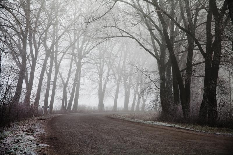Foggy road and trees. Mysterious forest background. Early morning landscape, frost on the ground. noise film effect. Horizontal photo stock images
