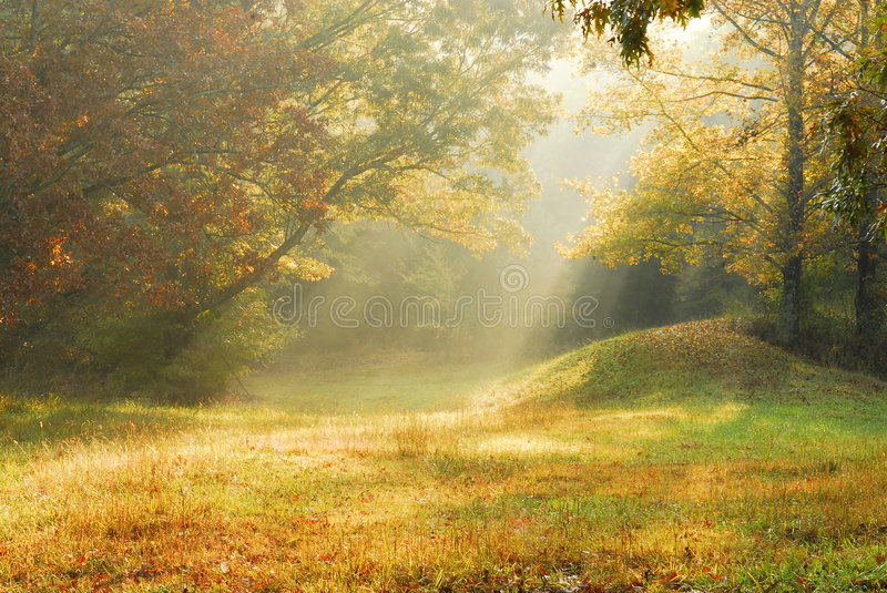 Foggy rural scene royalty free stock photography