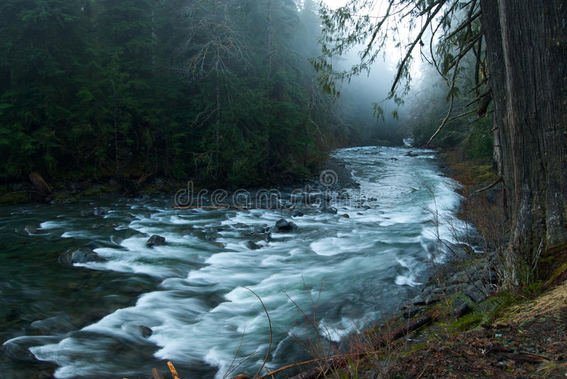 Download Foggy Scene On The Sol Duc River Stock Image - Image: 20064159