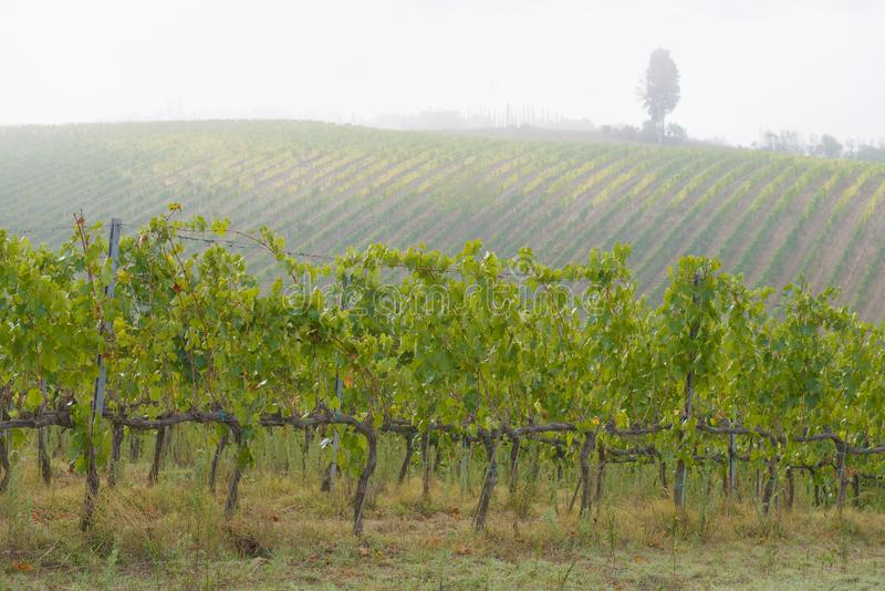 Foggy September morning in the vineyards of Tuscany, Italy stock image