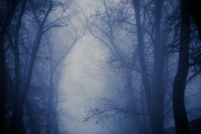 Foggy silhouettes of trunks and branches stock image