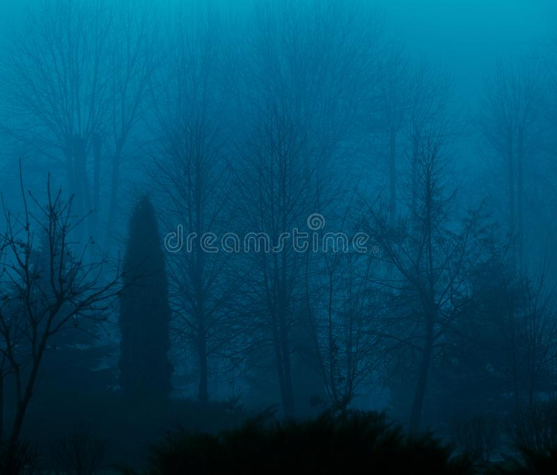Foggy silhouettes of trunks and branches royalty free stock photography