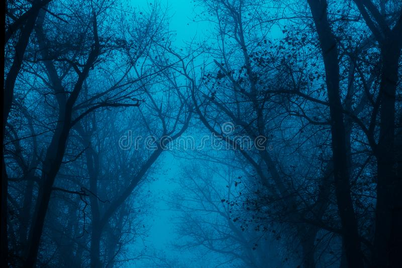 Foggy silhouettes of trunks and branches stock photos