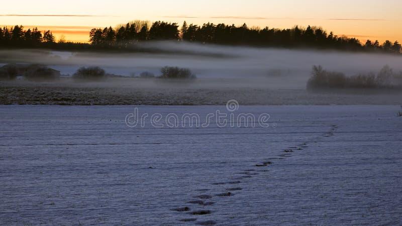 Foggy snowy landscape. royalty free stock photos