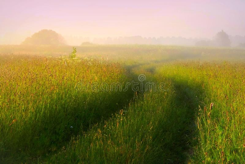 Foggy summer morning in Lithuania . Very nice meadow, winding road. stock photo