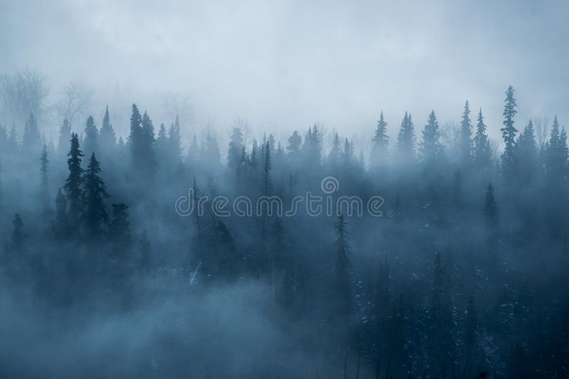 Foggy Sunrise in the Boreal Forest stock photo