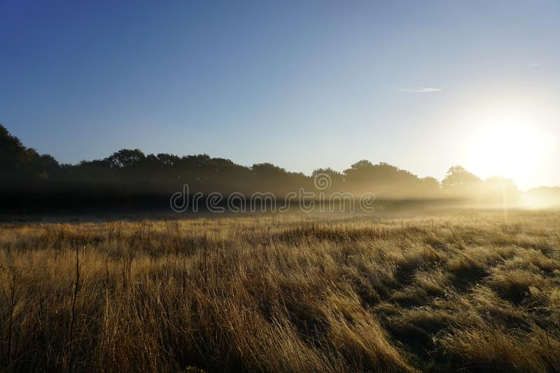 Foggy Sunrise in the Meadow. Shows a foggy sunrise background in the glass land meadow with blues skies royalty free stock photos