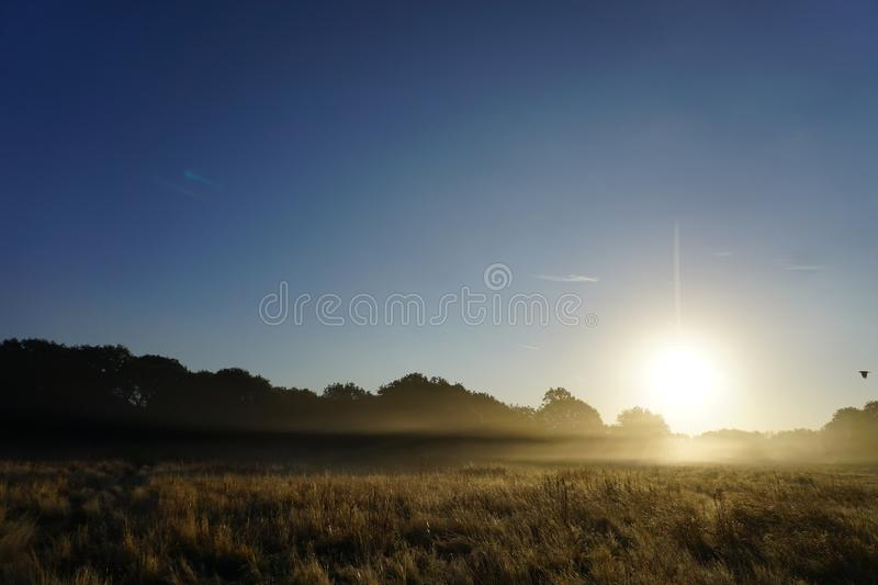 Foggy Sunrise in the Meadow. Shows a foggy sunrise background in the glass land meadow with blues skies royalty free stock images