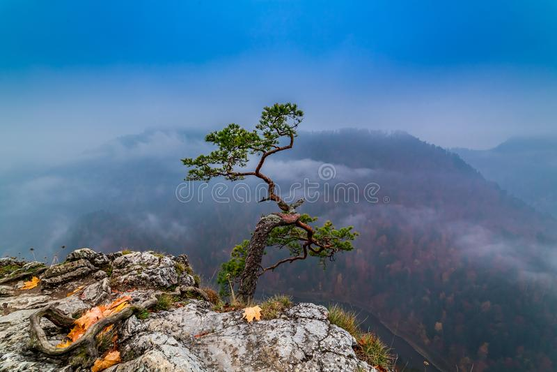 Foggy sunrise at Sokolica peak in Pieniny mountains, Poland. Europe stock photos