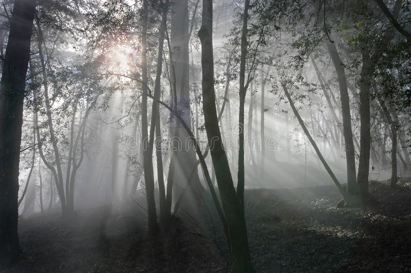 Foggy sunrise in the woods royalty free stock photography