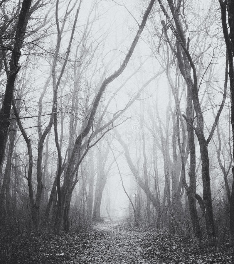 Foggy trail. Beauty morning's fog over the mystic forest stock image