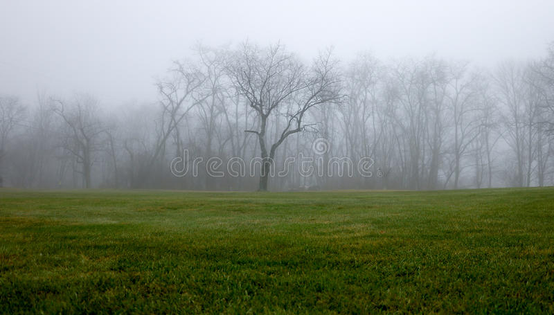 Foggy Tree Line stock photos