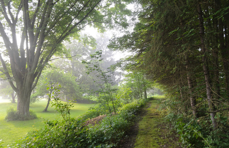 Foggy, tree lined lane royalty free stock images