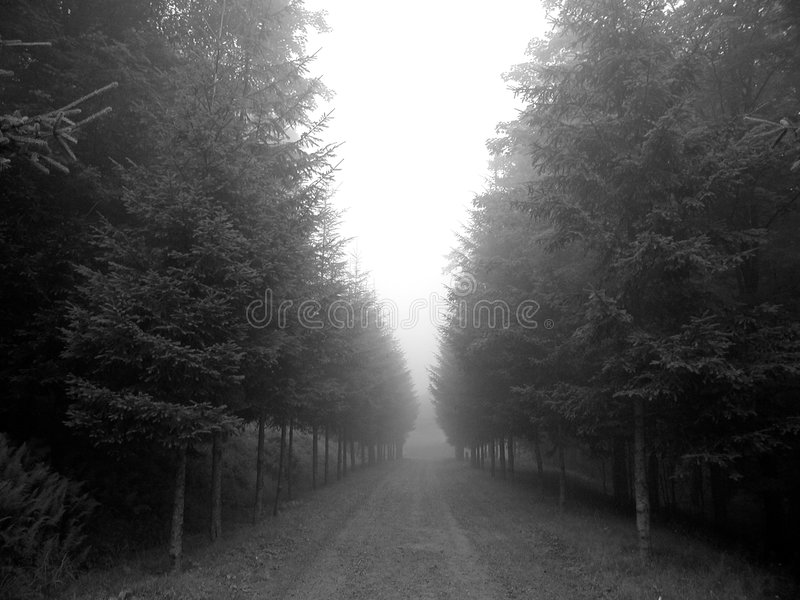 Download Foggy Trees stock photo. Image of solitude, forest, road - 16916