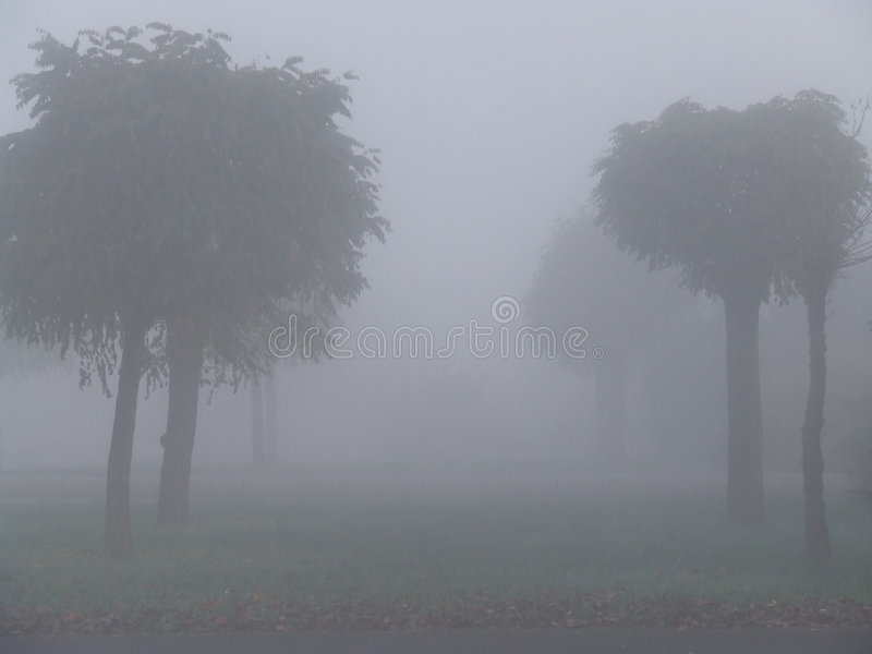 Download Foggy Trees Stock Photography - Image: 340292