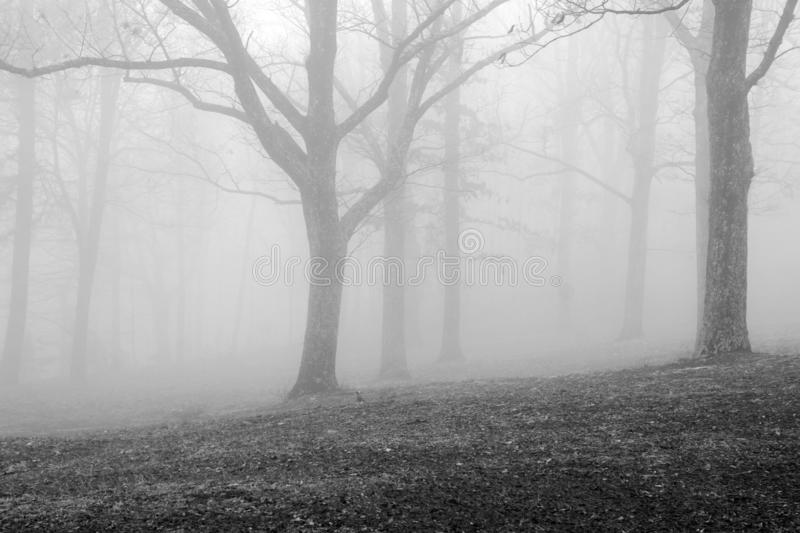 Foggy Trees in the Blue Ridge Mountains. A Black and white image of foggy trees located in the Blue Ridge Mountains of Virginia, USA stock image