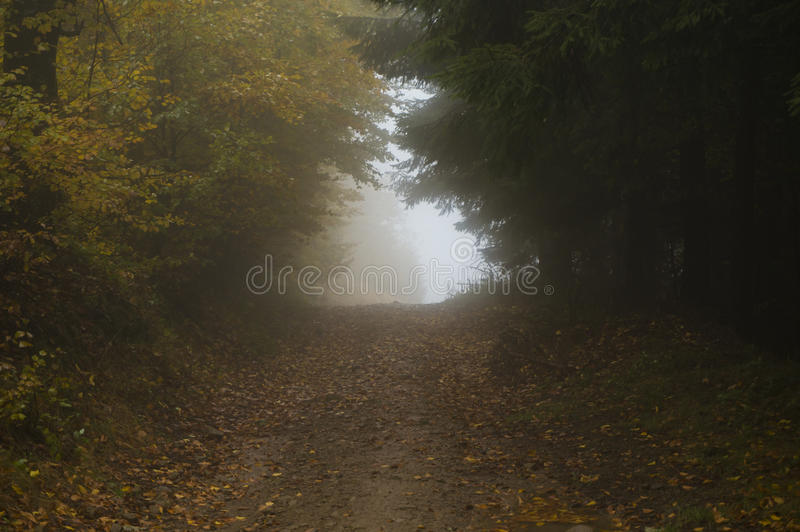 Foggy tunnel royalty free stock image