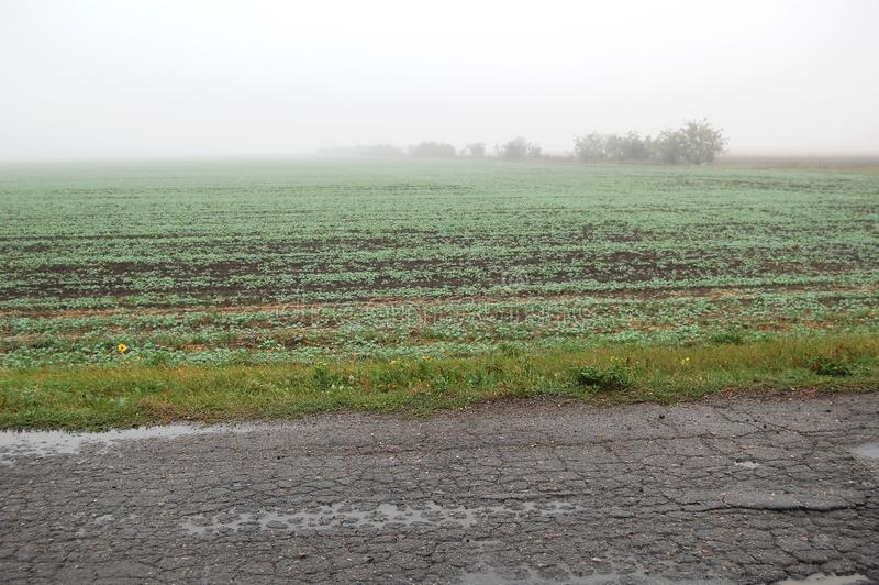 A foggy weat field near an old rural road on a rainy autumn day royalty free stock photo
