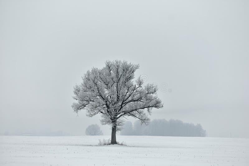 Foggy winter day. Black & white photography. stock photo