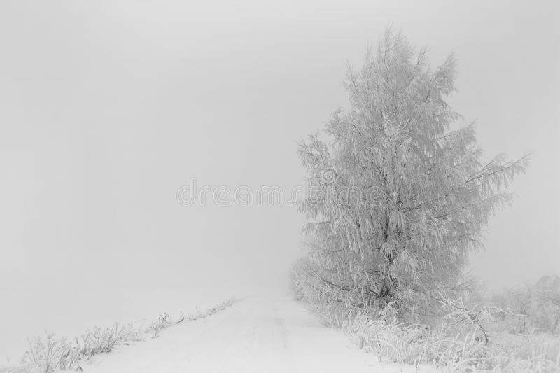 Foggy winter day.Trees near road. stock images
