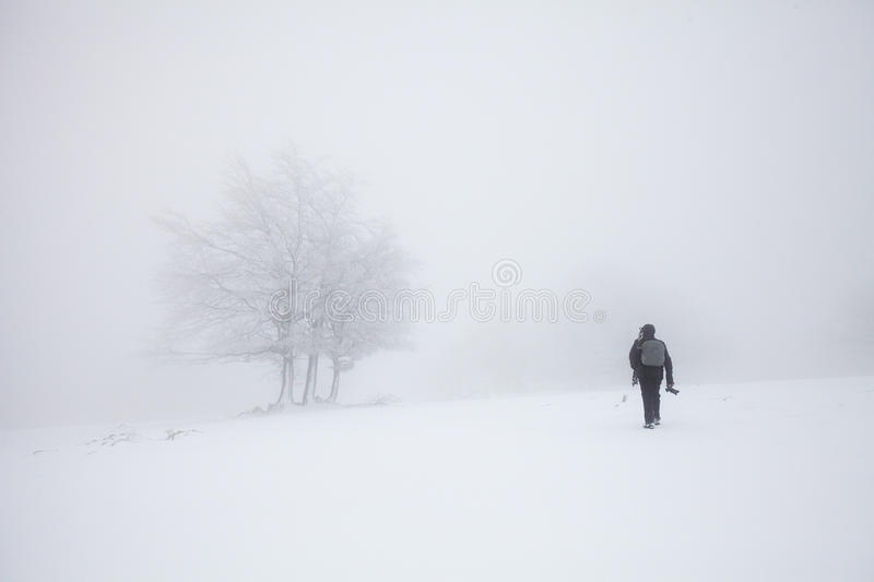 Foggy winter landscape in the forest royalty free stock photo