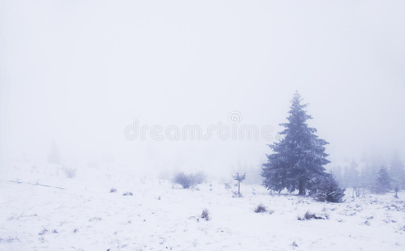 Foggy winter landscape with pinewood royalty free stock photos