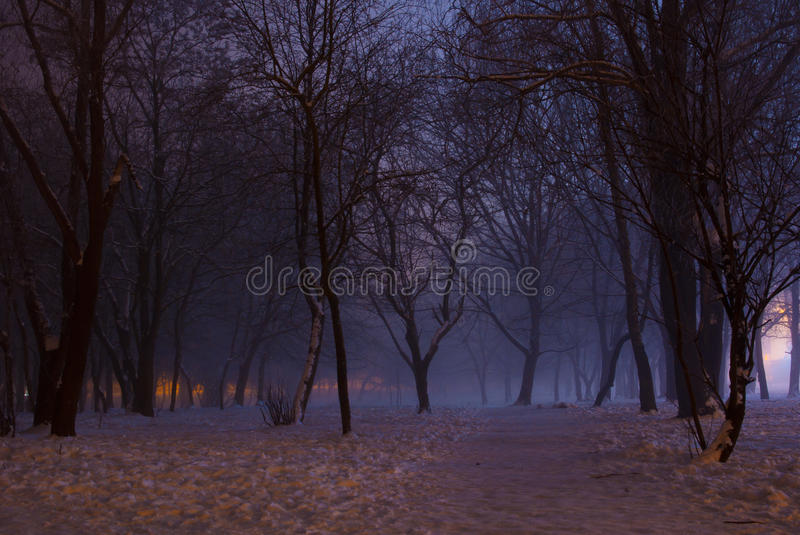 Foggy winter night in the park stock photos