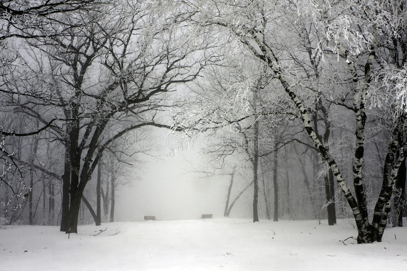 Foggy winter park royalty free stock images
