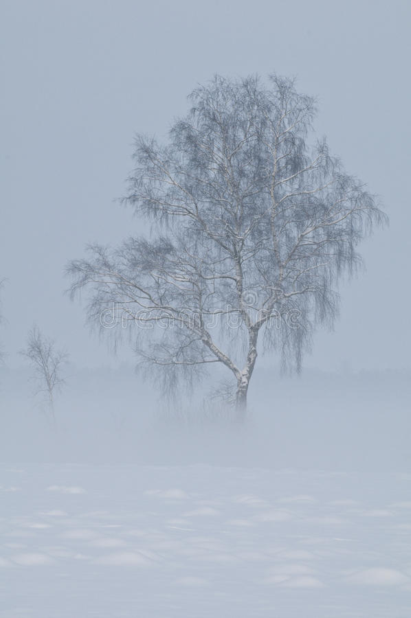 Foggy winter scenery stock photography