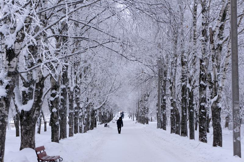 Foggy wintry morning in Saint-Petersburg Russia . People are walking to work on snow-covered avenue. stock photo