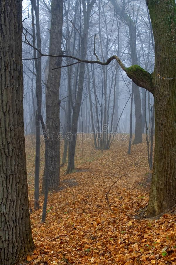 Download Foggy wood stock image. Image of beauty, backgrounds, branches - 3563315