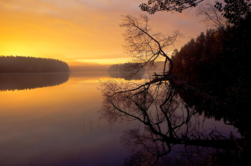 Foggy, wood lake autumn, in the quiet morning royalty free stock photos