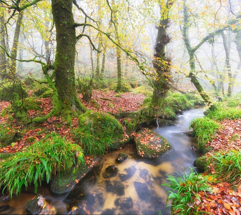Foggy Woods. Foggy woodland stream at Golitha Falls in Cornwall royalty free stock image