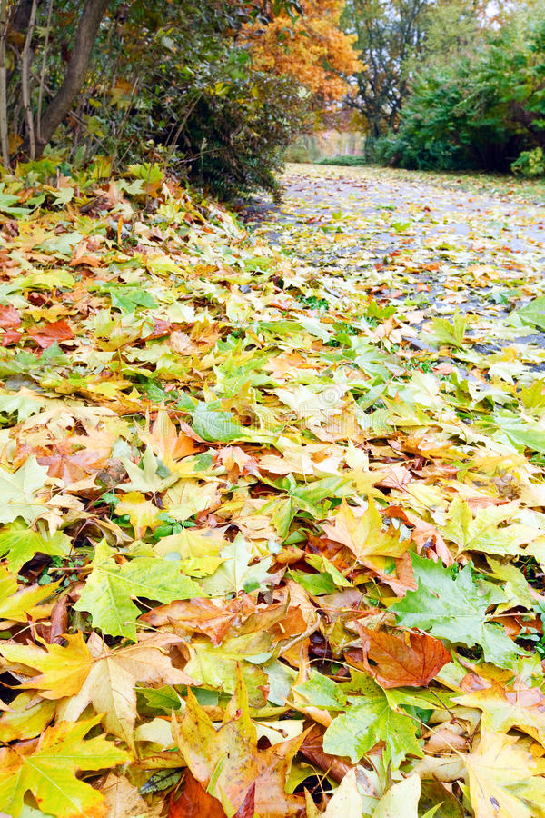 Fogli abscissed colore giallo di autunno sulla via della sosta immagini stock libere da diritti