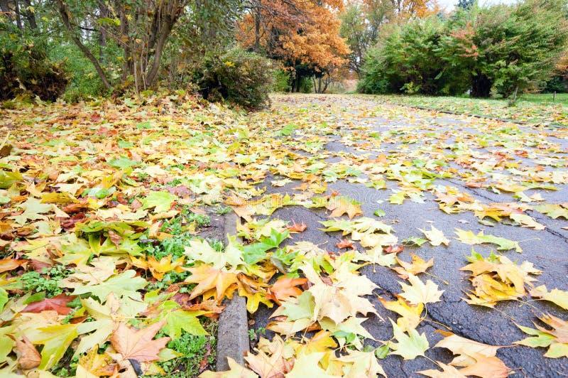 Fogli abscissed colore giallo di autunno sulla via della sosta fotografia stock libera da diritti
