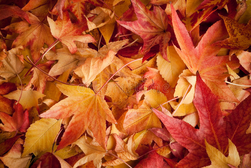 Fogli in autunno fotografia stock libera da diritti